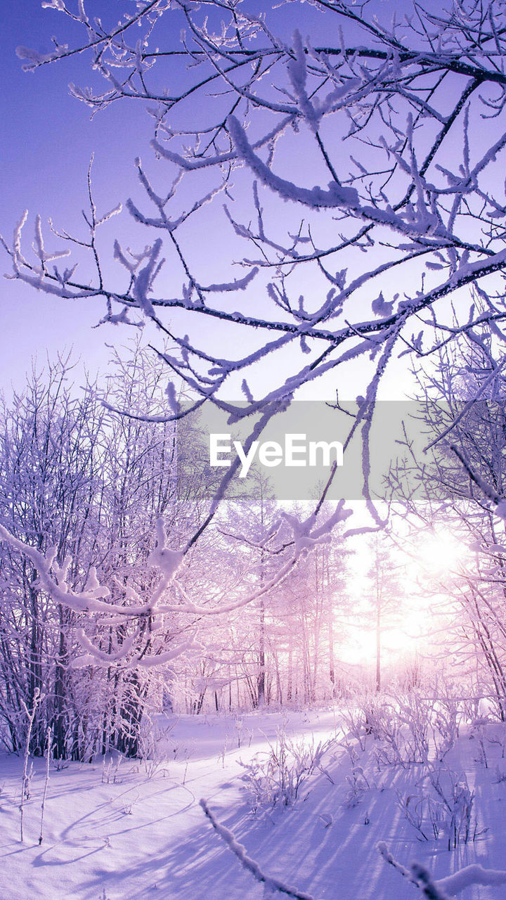 bare tree, winter, tree, snow, cold temperature, nature, beauty in nature, tranquil scene, tranquility, scenics, branch, no people, weather, day, sky, landscape, outdoors