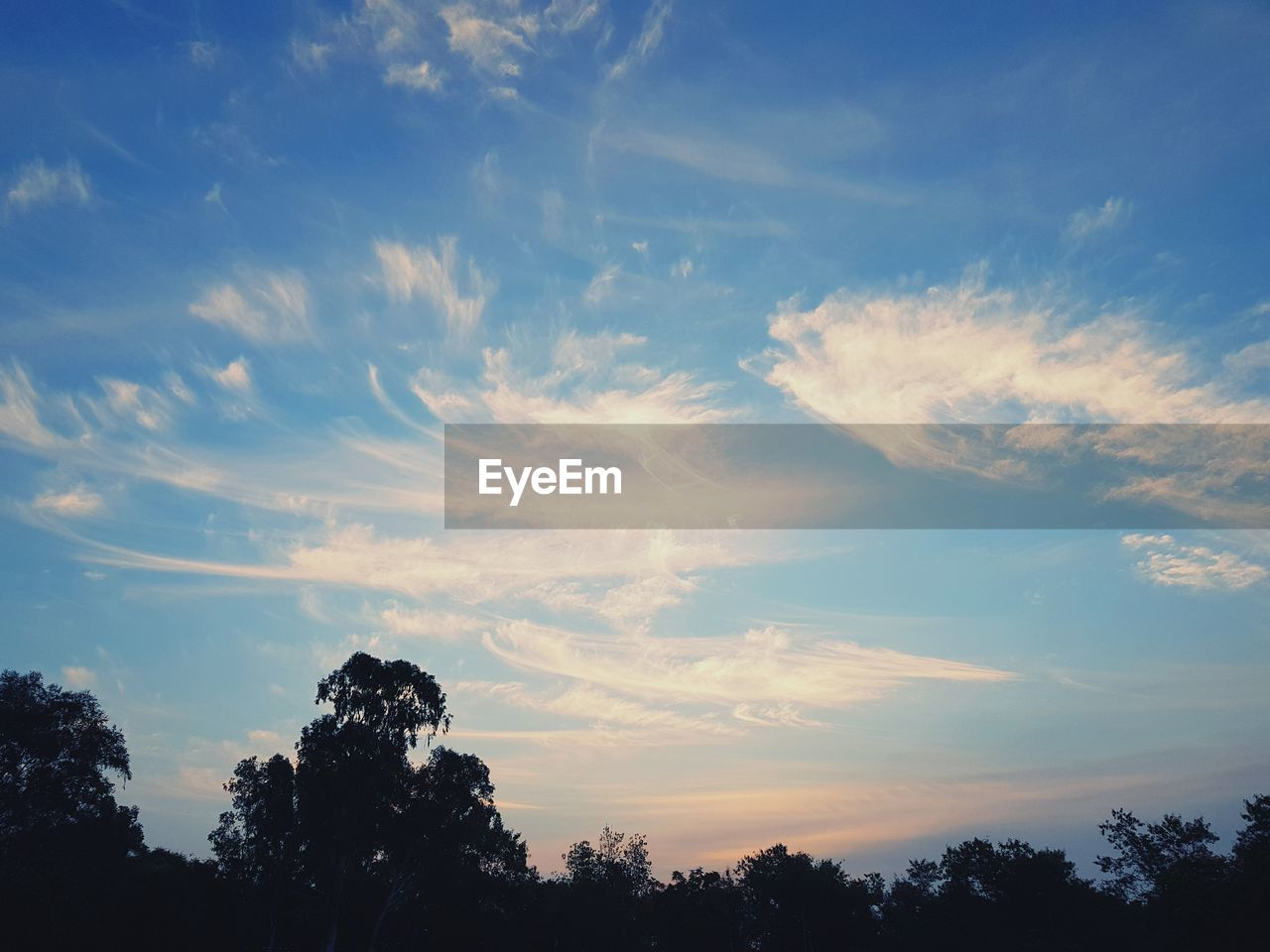 sky, tree, beauty in nature, nature, scenics, low angle view, tranquil scene, tranquility, cloud - sky, silhouette, no people, outdoors, day