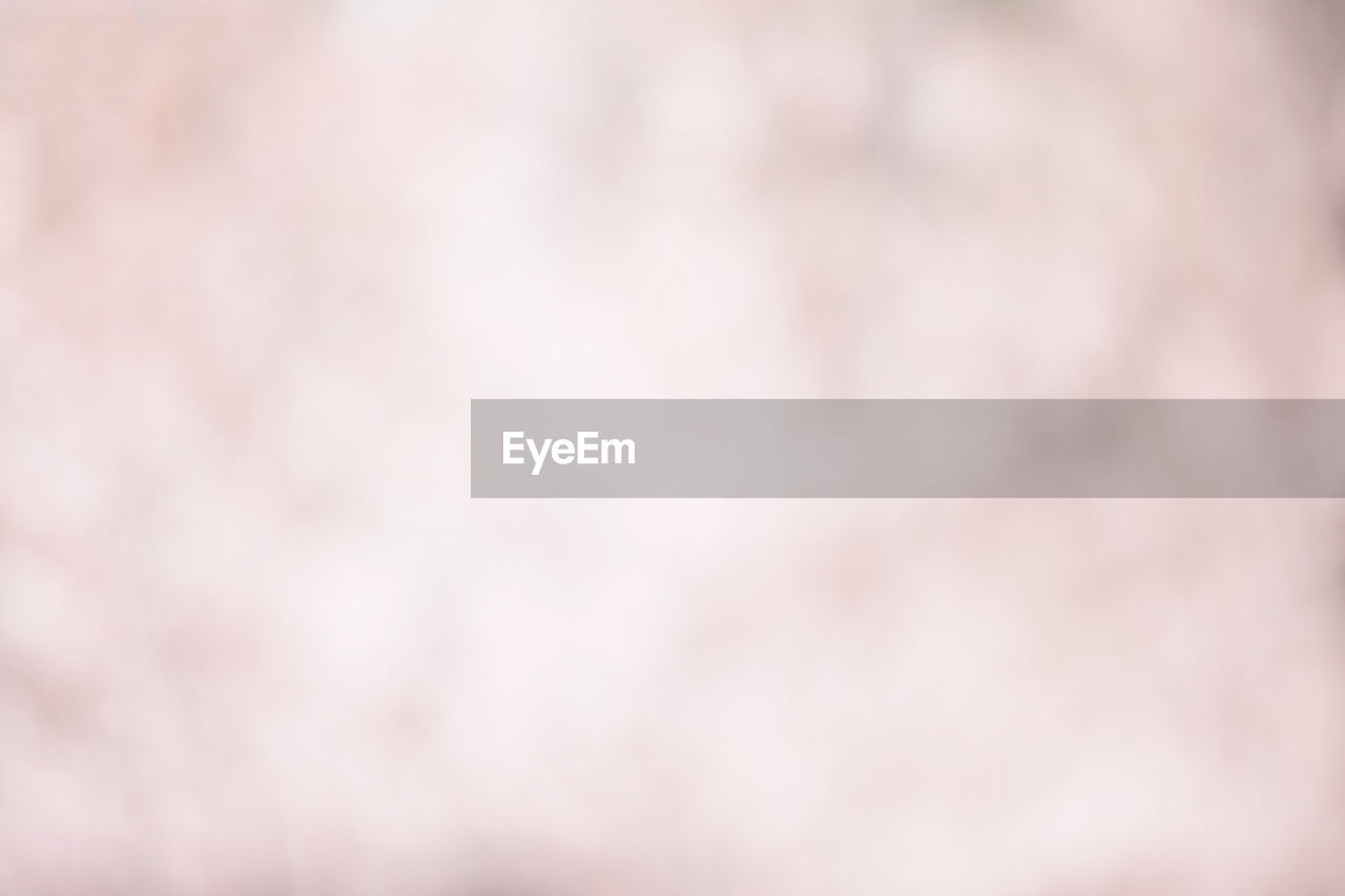 full frame, backgrounds, no people, pattern, textured, close-up, indoors, nature, abstract, softness, white color, pastel colored, day, selective focus, pink color, copy space, abstract backgrounds, defocused, built structure