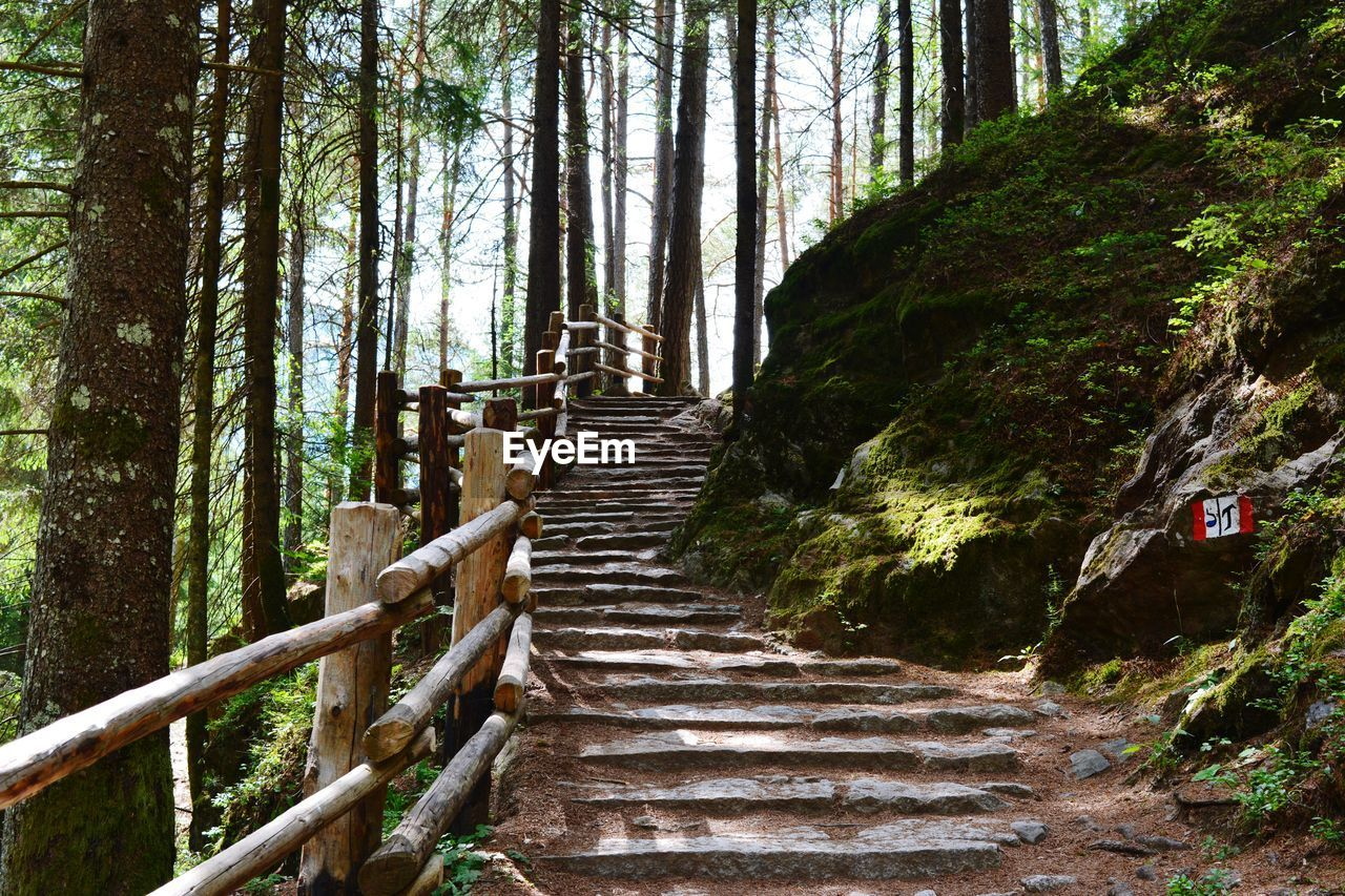plant, tree, forest, land, the way forward, nature, staircase, day, steps and staircases, growth, architecture, direction, tranquility, woodland, tranquil scene, beauty in nature, no people, wood - material, tree trunk, railing, outdoors