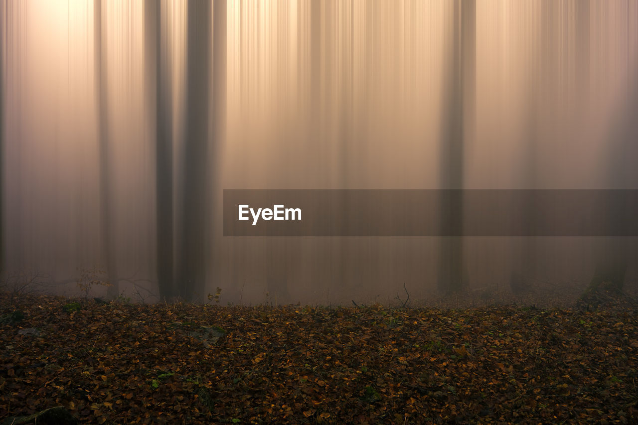 fog, land, autumn, nature, tranquility, no people, beauty in nature, plant, leaf, day, plant part, tree, change, scenics - nature, outdoors, field, tranquil scene, falling, forest, leaves, hazy
