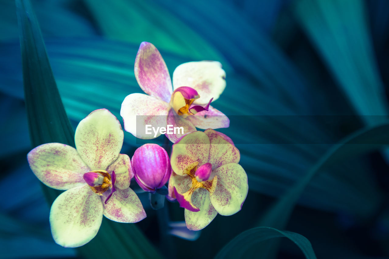flower, growth, petal, beauty in nature, freshness, nature, fragility, leaf, flower head, close-up, no people, plant, day, outdoors, blooming, lotus water lily