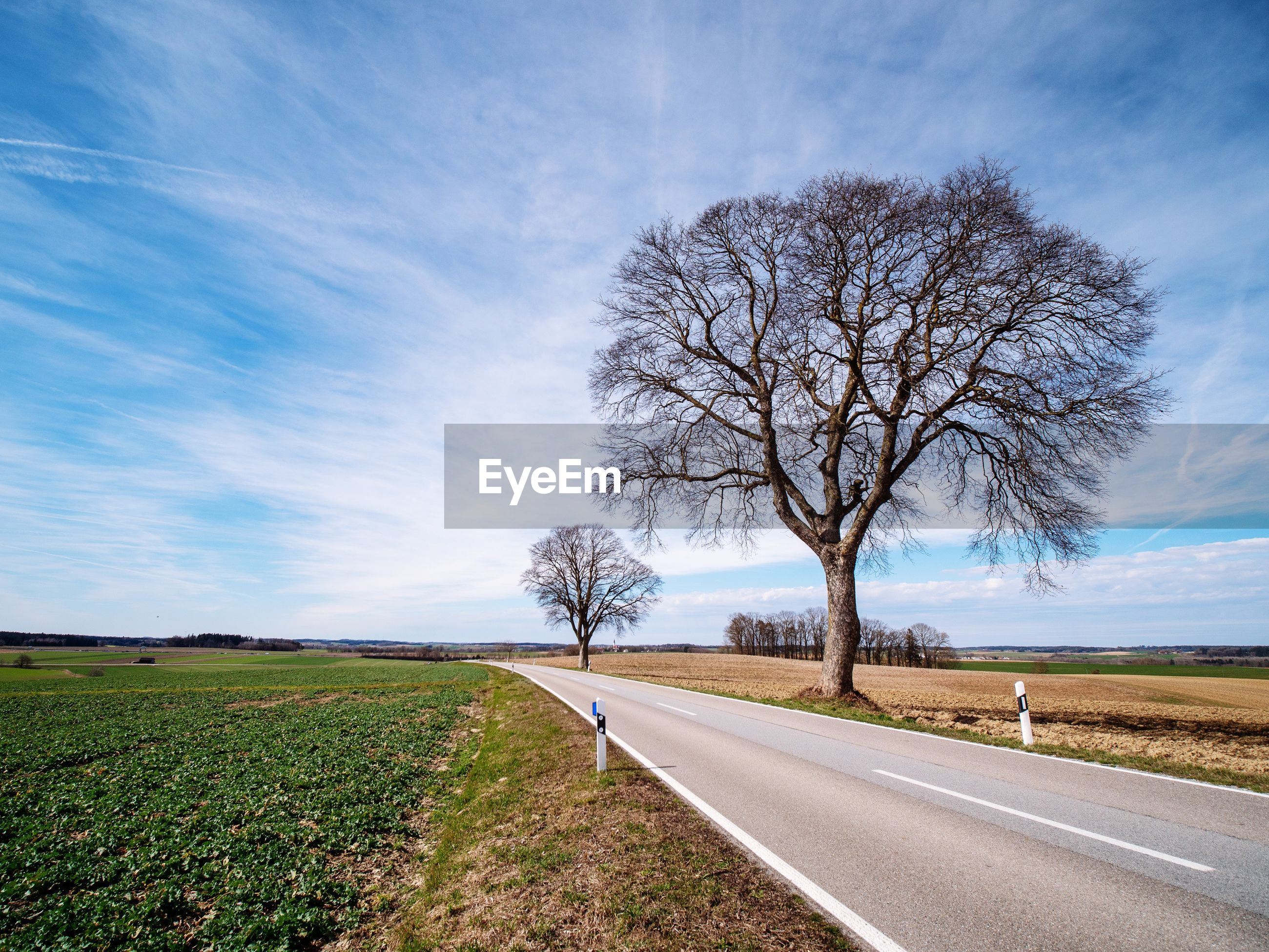 Bare tree on field by road against sky
