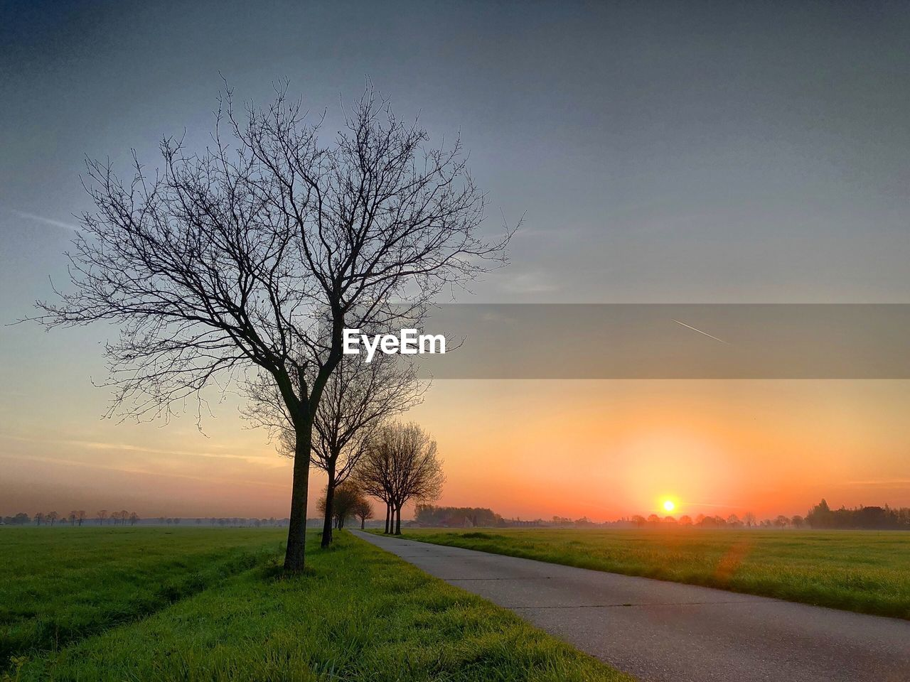 sky, sunset, tree, plant, bare tree, beauty in nature, landscape, scenics - nature, field, tranquil scene, tranquility, environment, no people, orange color, nature, road, sun, grass, branch, land, outdoors