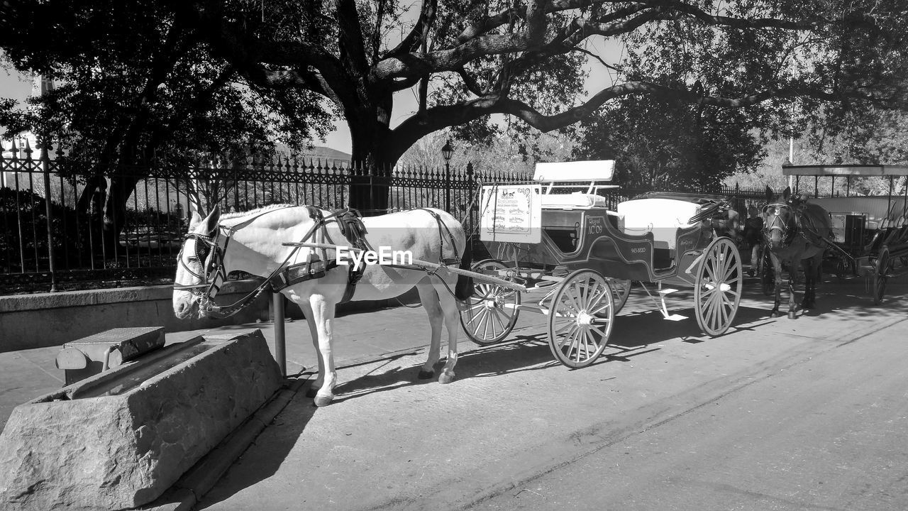 Horse carriage by trough on street