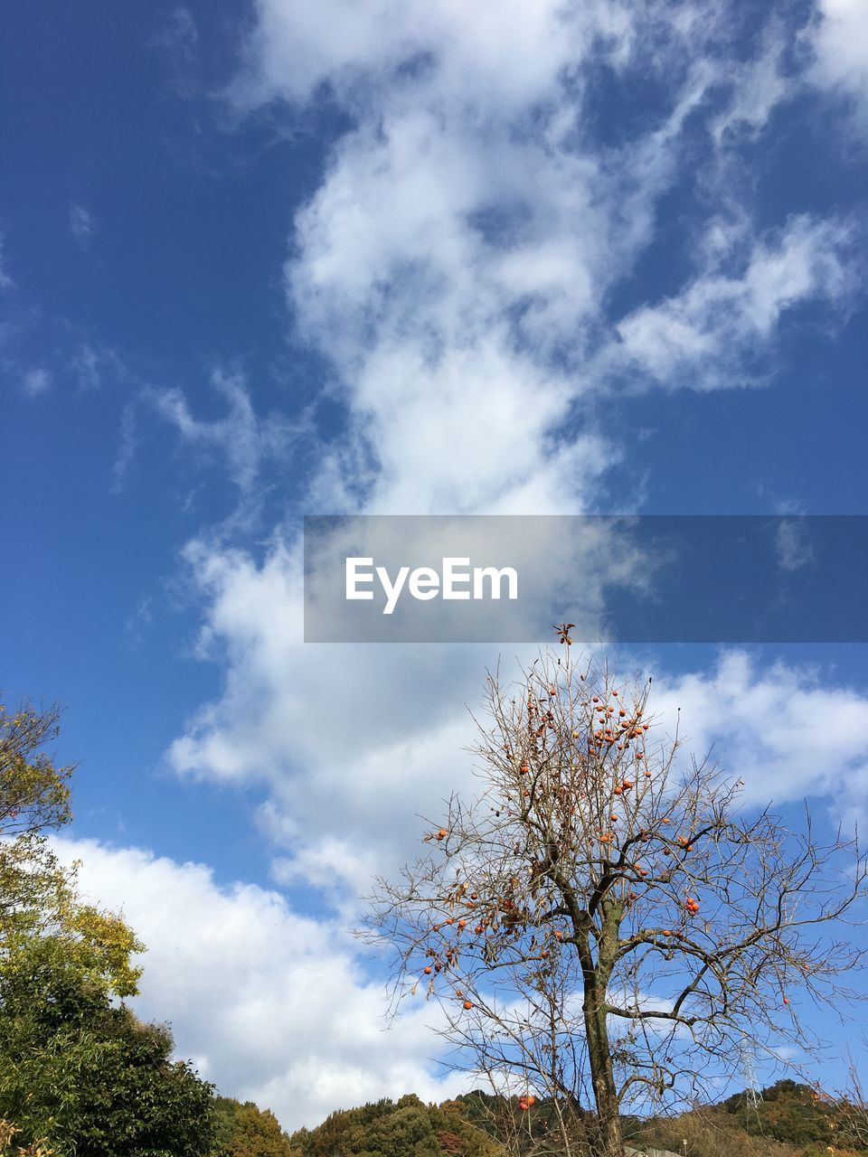 tree, sky, cloud - sky, low angle view, beauty in nature, nature, branch, day, no people, blue, tranquility, outdoors, growth, scenics, flower, freshness