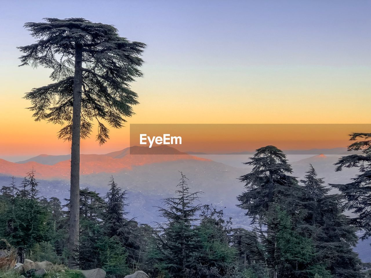tree, sunset, beauty in nature, sky, scenics - nature, tranquility, tranquil scene, plant, orange color, non-urban scene, mountain, growth, no people, nature, idyllic, outdoors, palm tree, land, silhouette, landscape, coniferous tree
