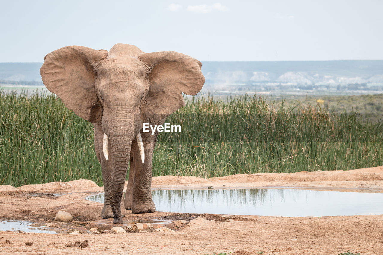 Elephant standing by lake against sky