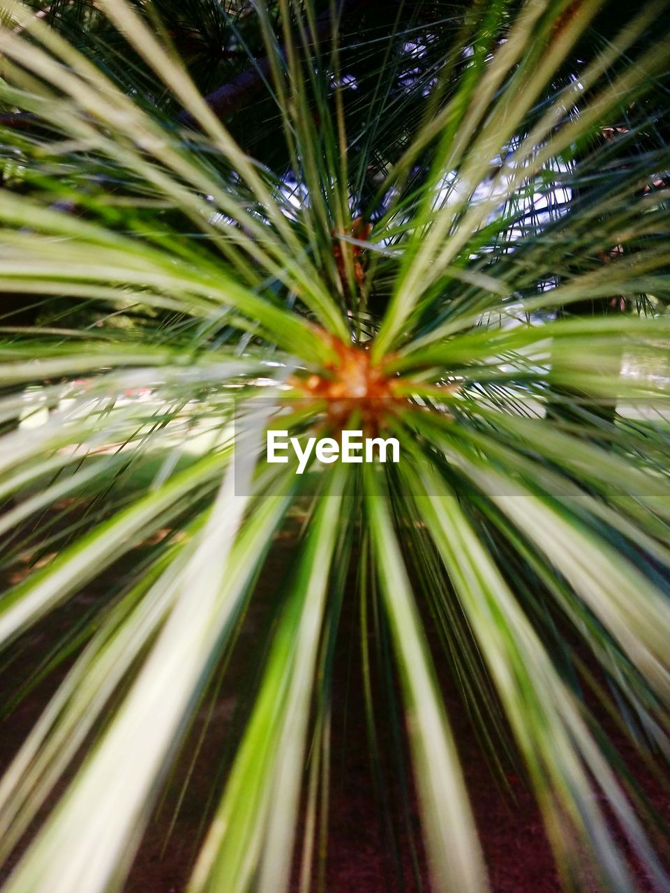 growth, nature, no people, plant, green color, outdoors, beauty in nature, close-up, day, freshness, fragility, needle, tree