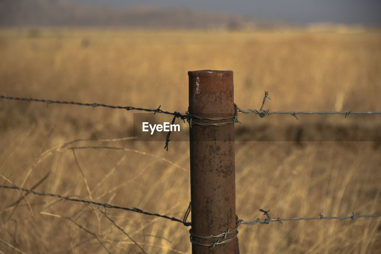 barbed wire, protection, safety, security, metal, razor wire, focus on foreground, outdoors, day, field, no people, barricade, close-up, wooden post, nature, sky