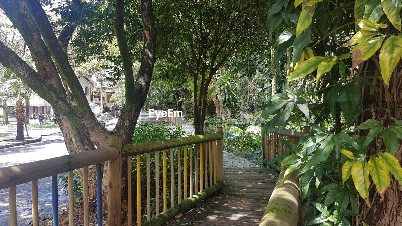 tree, plant, growth, nature, tree trunk, footpath, trunk, beauty in nature, day, leaf, railing, green color, plant part, no people, tranquility, outdoors, direction, the way forward, barrier, boundary