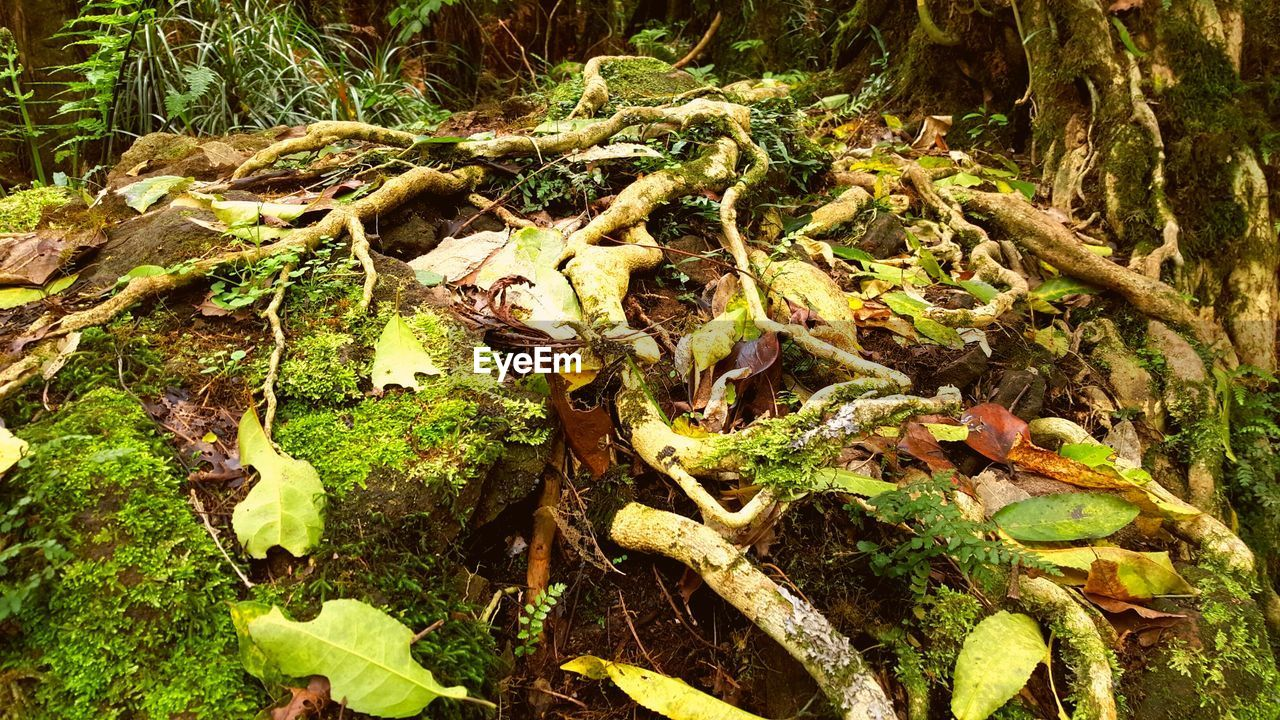 nature, green color, no people, high angle view, growth, moss, outdoors, day, tree trunk, leaf, tree, animal themes, close-up, forest, beauty in nature