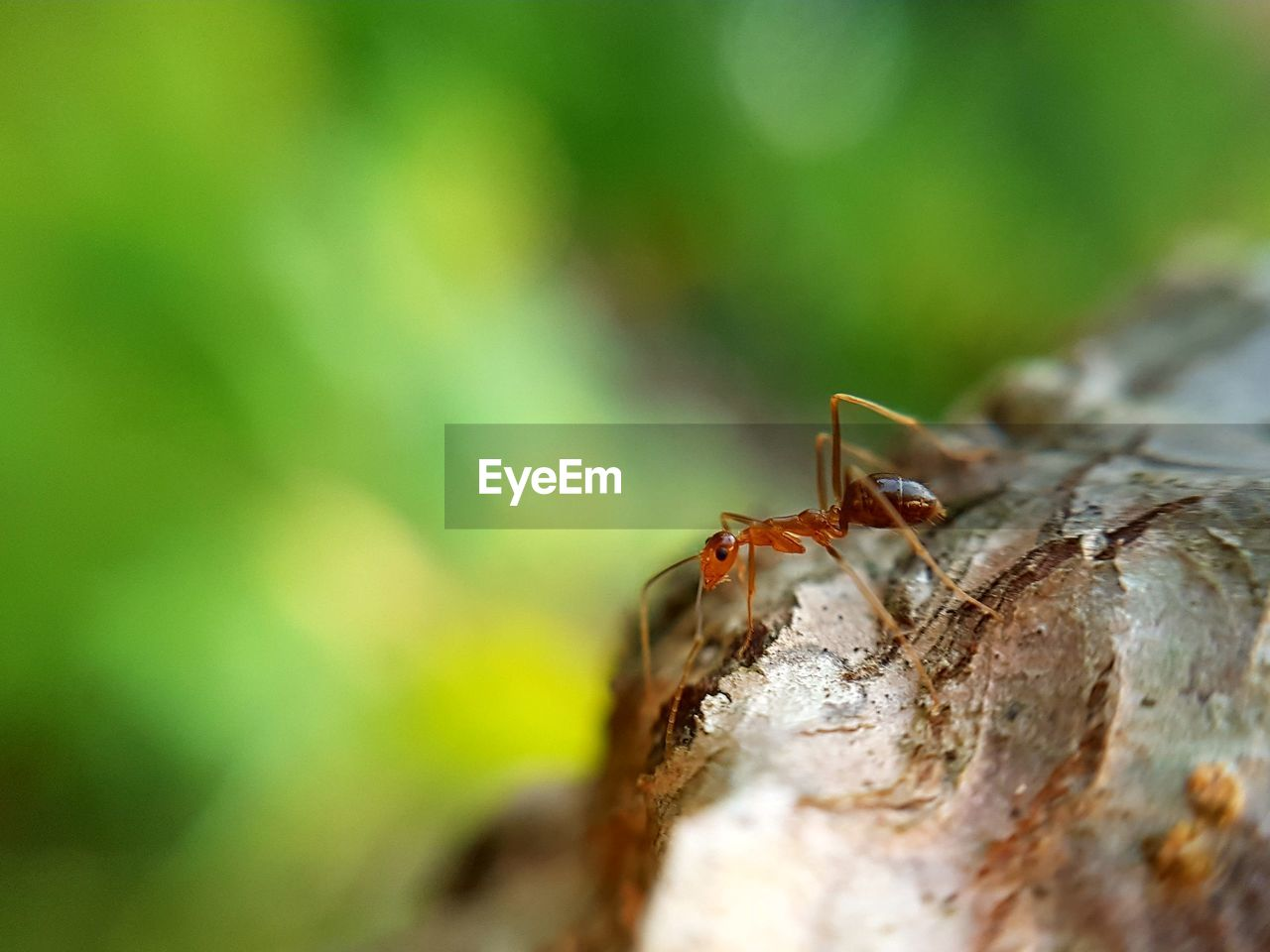 animals in the wild, close-up, animal wildlife, selective focus, animal, animal themes, invertebrate, one animal, insect, day, nature, no people, outdoors, arachnid, spider, arthropod, zoology, animal body part, focus on foreground, tree trunk, animal leg