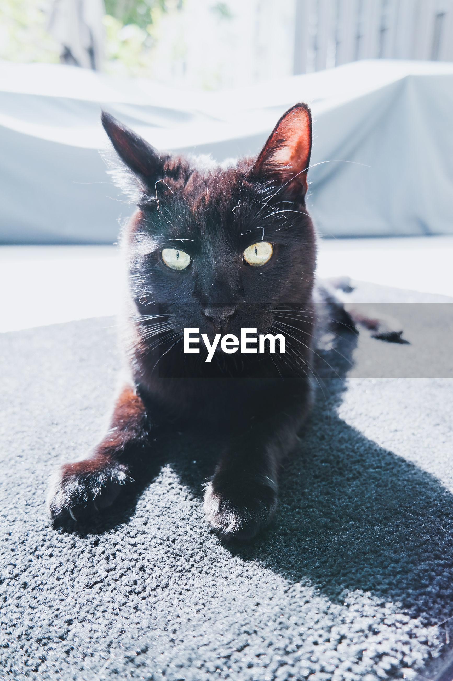 CLOSE-UP PORTRAIT OF BLACK CAT SITTING ON FLOOR