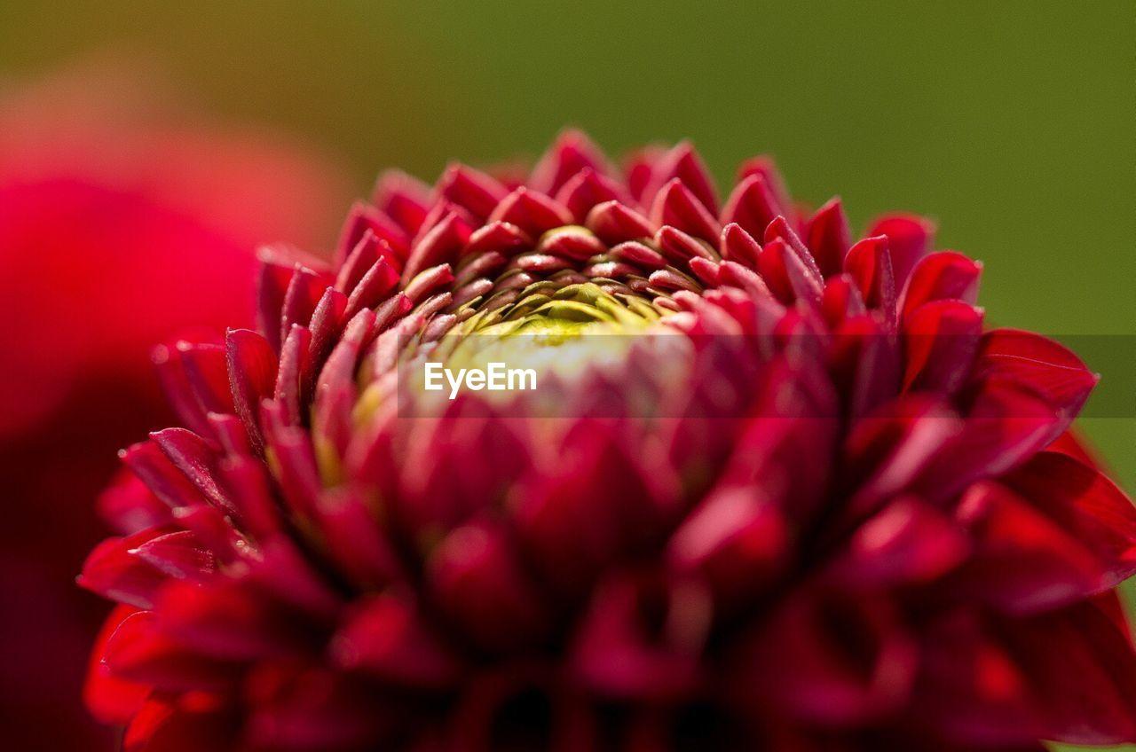 Macro Shot Of Water Drops On Pink Flower