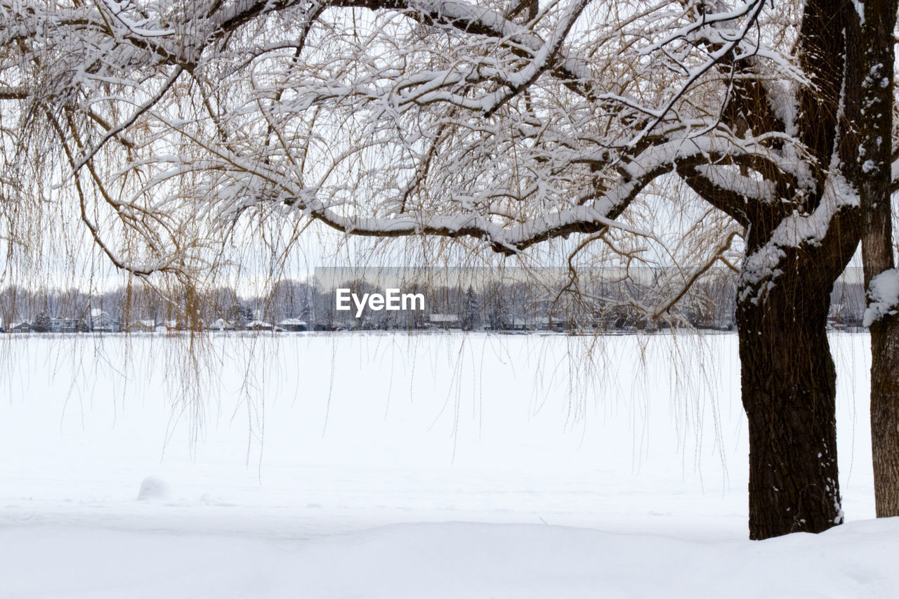 snow, cold temperature, winter, tree, plant, beauty in nature, nature, white color, tranquility, scenics - nature, tranquil scene, frozen, no people, branch, bare tree, day, land, water, environment, outdoors, extreme weather, snowing, blizzard