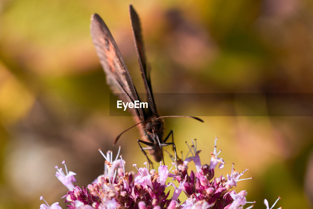 insect, animals in the wild, flower, one animal, nature, animal themes, beauty in nature, no people, fragility, butterfly - insect, growth, focus on foreground, outdoors, day, animal wildlife, pollination, plant, close-up, freshness, flower head