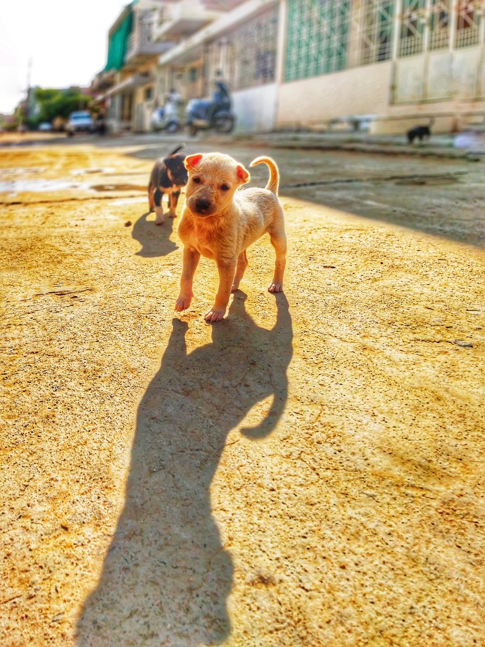 domestic animals, pets, one animal, domestic, shadow, mammal, canine, dog, sunlight, vertebrate, day, nature, incidental people, outdoors, standing, people, city, small