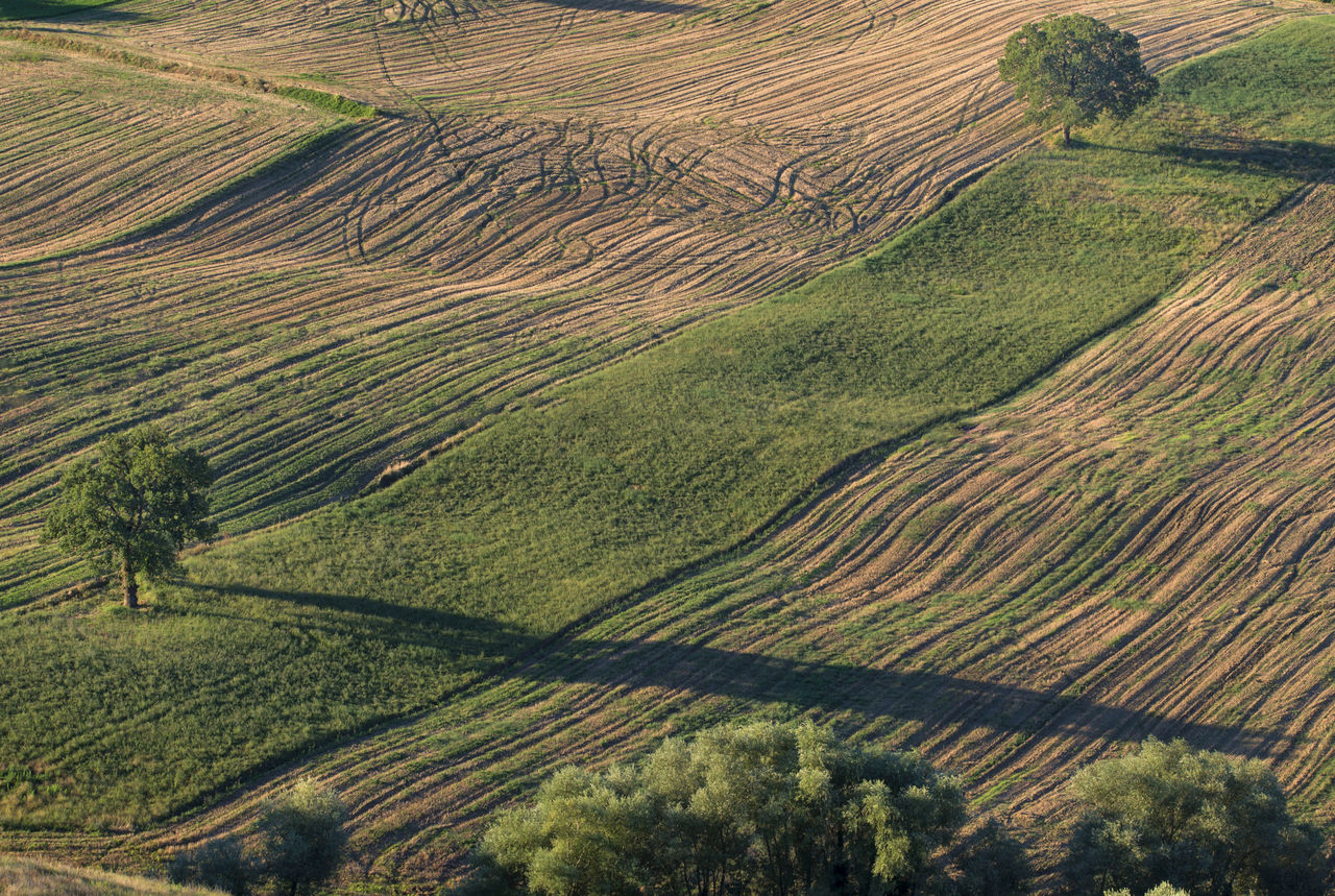 agriculture, landscape, farm, scenics, tranquil scene, rural scene, cultivated land, aerial view, nature, field, outdoors, beauty in nature, rice paddy, tranquility, high angle view, patchwork landscape, no people, terraced field, day, tree, plowed field