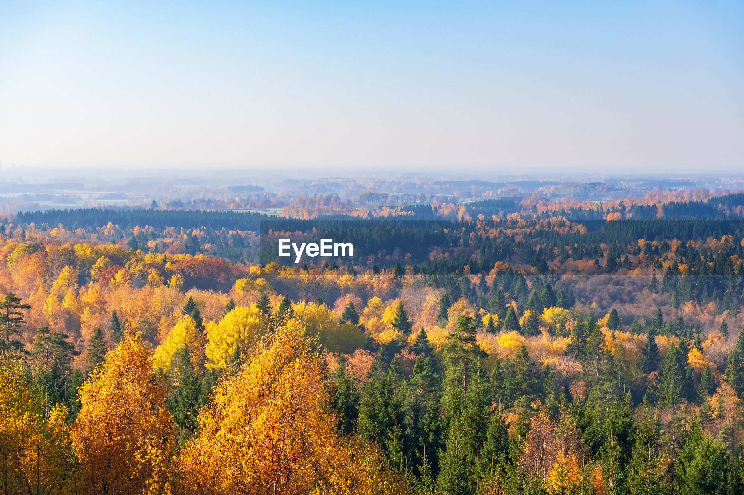 SCENIC VIEW OF TREES DURING AUTUMN AGAINST SKY