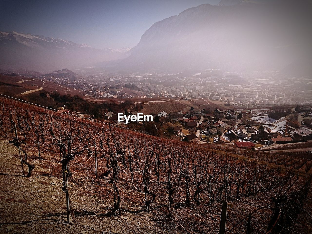 High angle view of dry vineyard against mountains in foggy weather