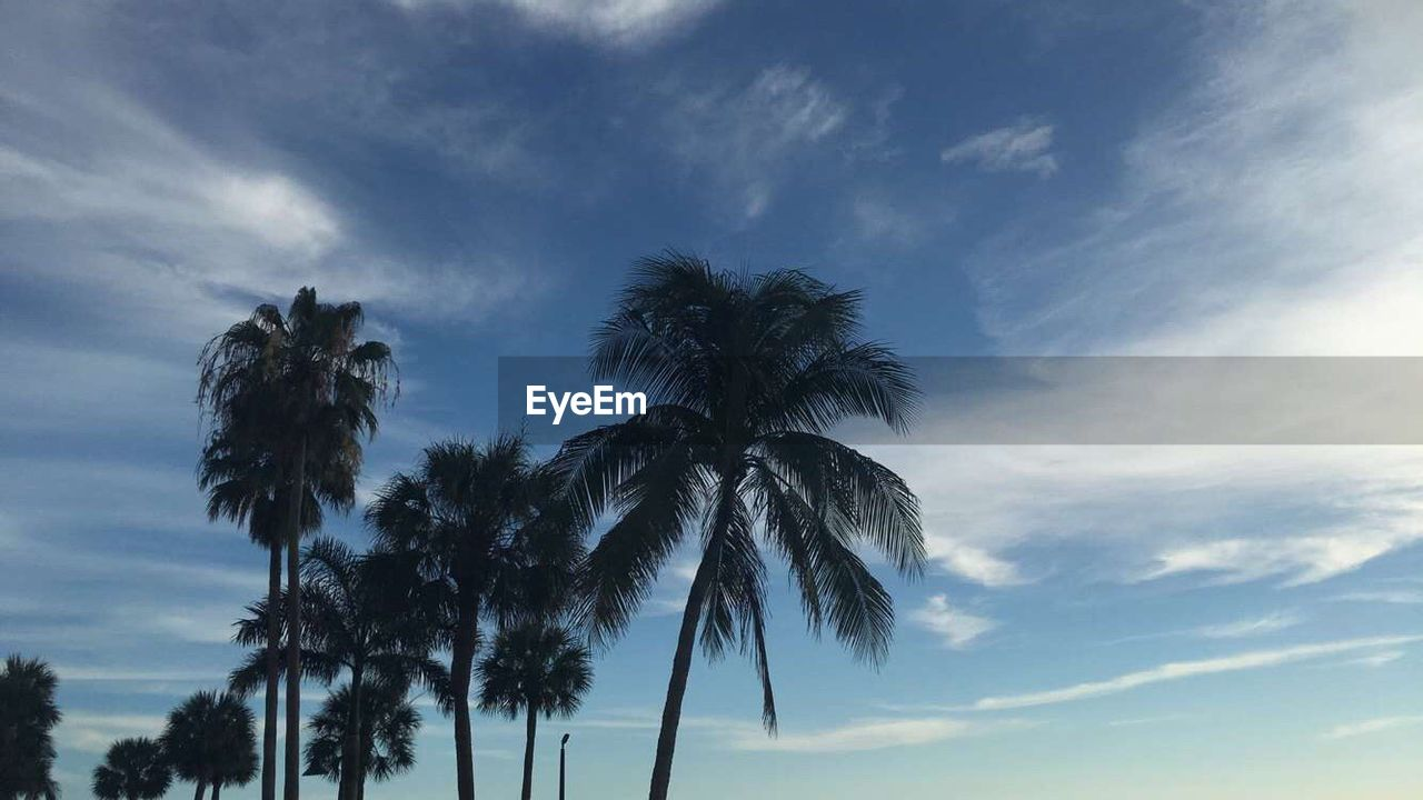 palm tree, tree, sky, low angle view, cloud - sky, tree trunk, nature, tranquility, no people, scenics, outdoors, beauty in nature, day, growth, blue, silhouette, beach, sea