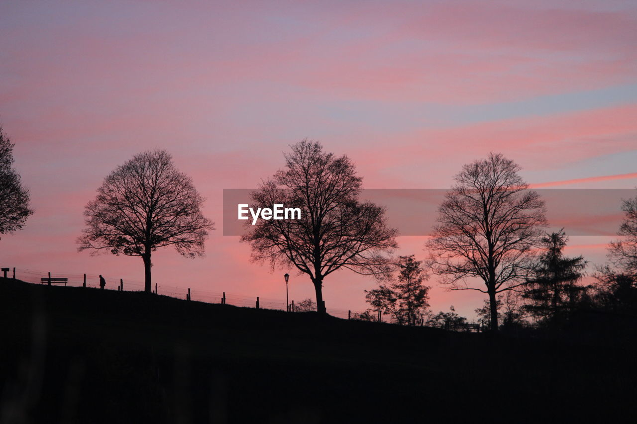 Low angle view of silhouette bare trees on field at sunset