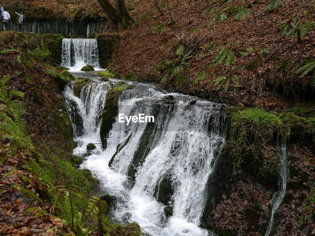 waterfall, water, motion, no people, forest, nature, beauty in nature, outdoors, day