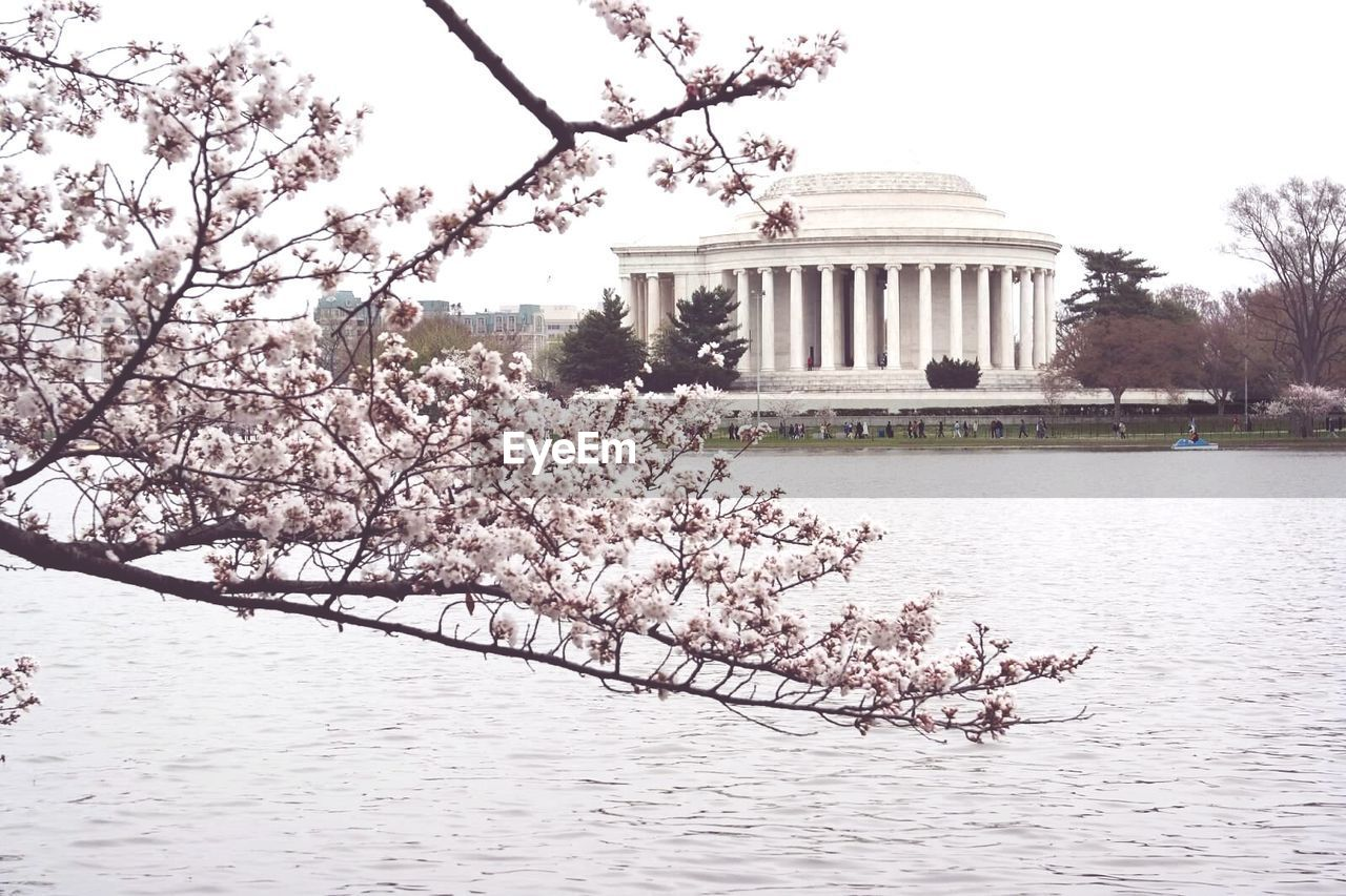Cherry blossoms over tidal basin against jefferson memorial