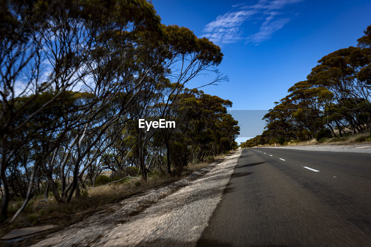 direction, the way forward, transportation, road, sky, tree, plant, diminishing perspective, nature, no people, empty road, vanishing point, sign, day, non-urban scene, sunlight, road marking, blue, marking, symbol, outdoors, dividing line, long