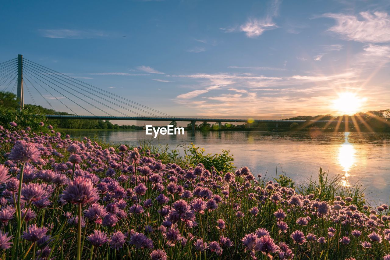 beauty in nature, plant, sky, flower, flowering plant, nature, growth, scenics - nature, water, cloud - sky, sunset, sunlight, freshness, fragility, sun, tranquil scene, vulnerability, tranquility, no people, outdoors, purple, lens flare