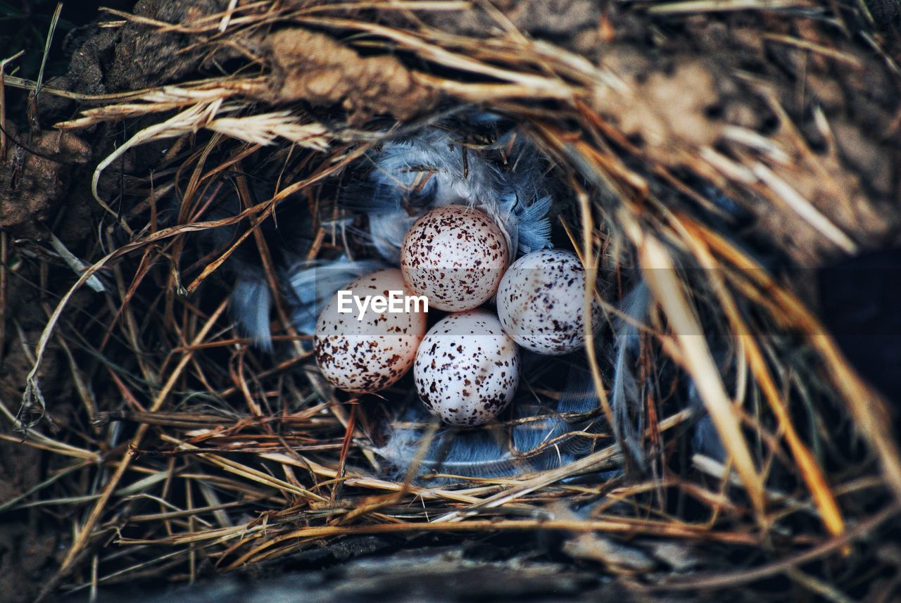 no people, plant, animal nest, nature, close-up, day, high angle view, bird nest, selective focus, dry, land, animal themes, animal, food, beginnings, animals in the wild, animal wildlife, outdoors, new life, twig