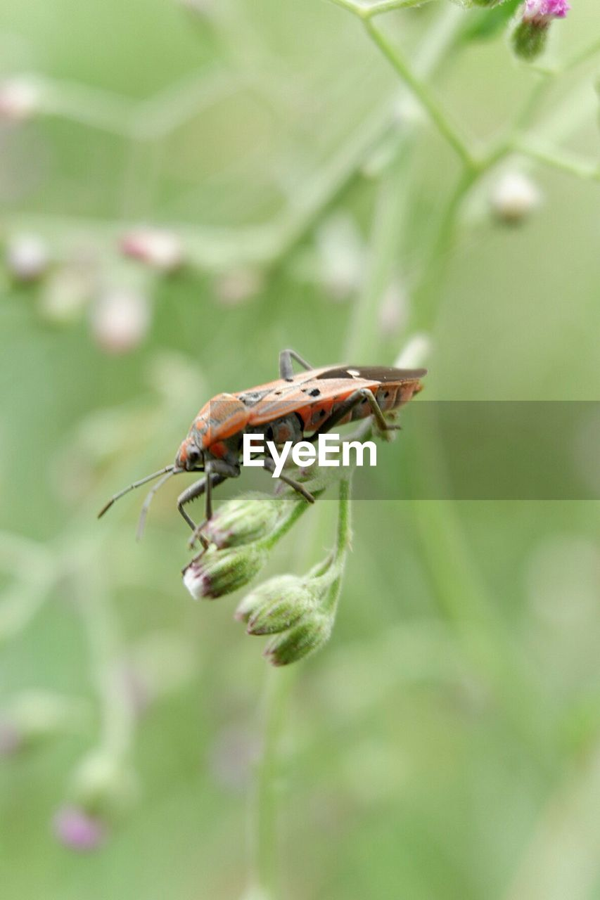 invertebrate, insect, animal themes, animal wildlife, animals in the wild, animal, one animal, plant, close-up, beauty in nature, nature, day, growth, no people, selective focus, focus on foreground, plant part, flower, green color, leaf, outdoors, animal wing, pollination
