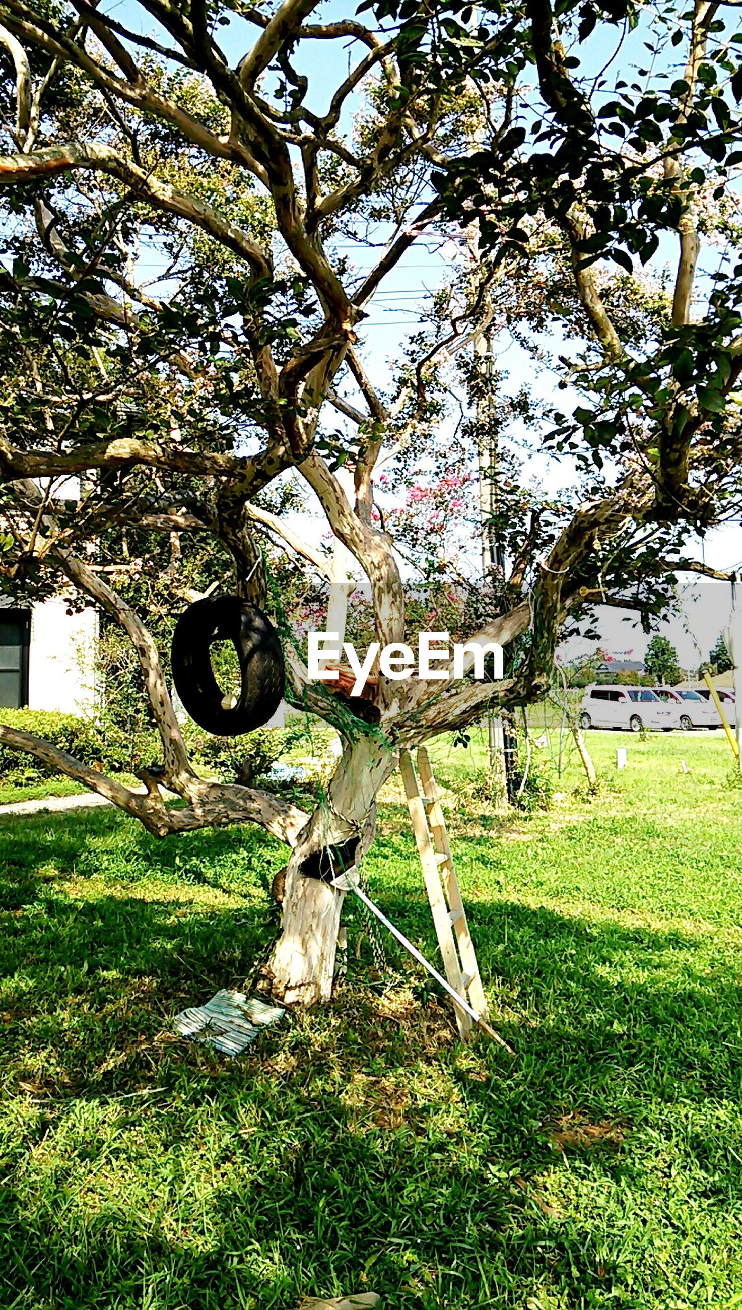 grass, tree, built structure, building exterior, lawn, architecture, field, grassy, green color, branch, park - man made space, growth, tree trunk, tombstone, day, sunlight, bare tree, cemetery, outdoors, abandoned