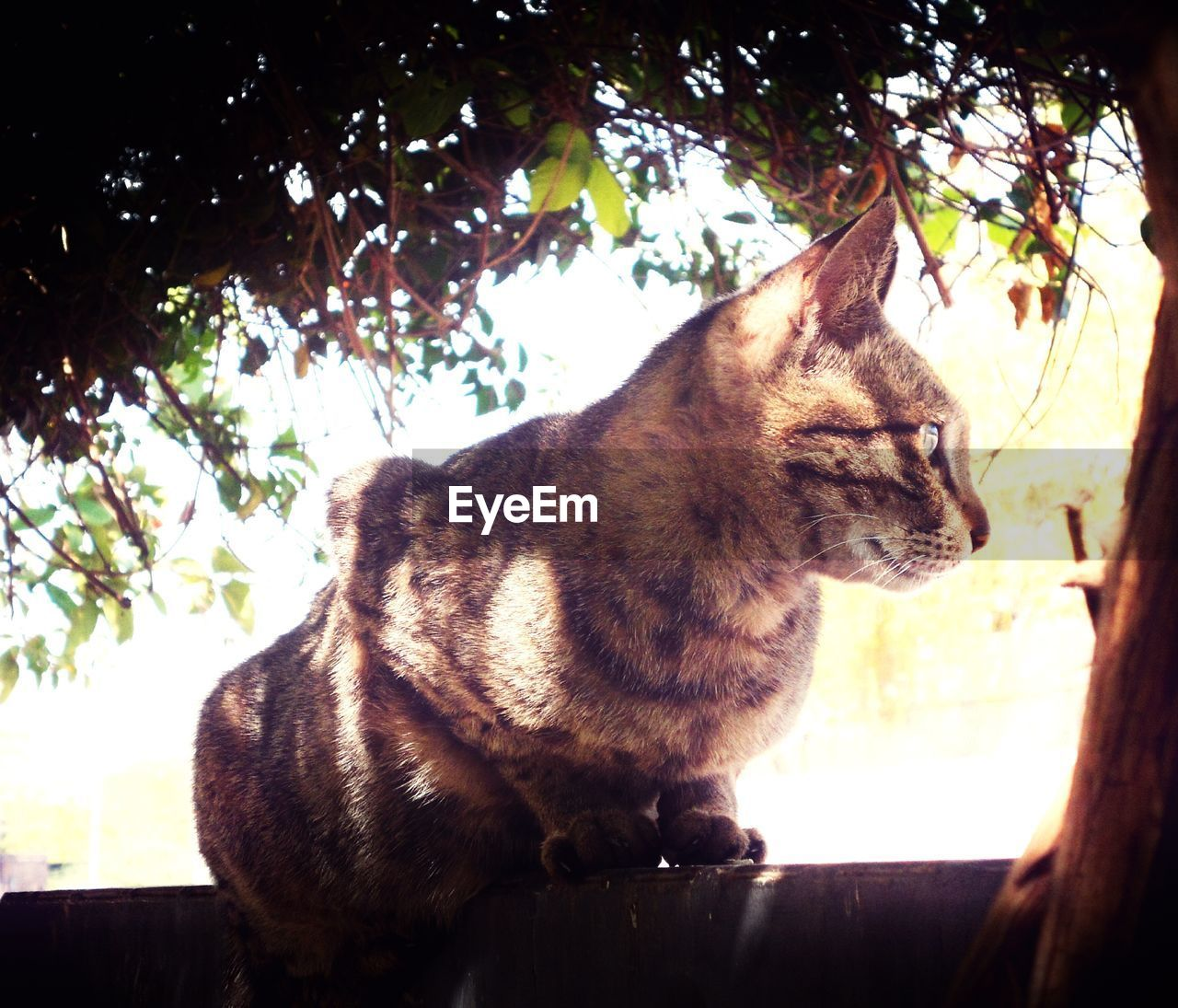 domestic cat, one animal, animal themes, tree, mammal, domestic animals, pets, no people, feline, day, branch, outdoors, low angle view, sitting, nature, close-up