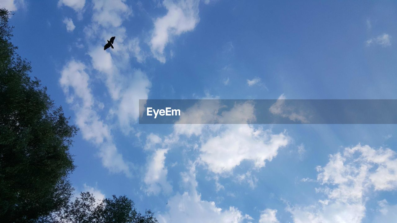 sky, low angle view, cloud - sky, flying, bird, one animal, day, animals in the wild, animal themes, tree, nature, outdoors, mid-air, silhouette, animal wildlife, no people, beauty in nature, spread wings