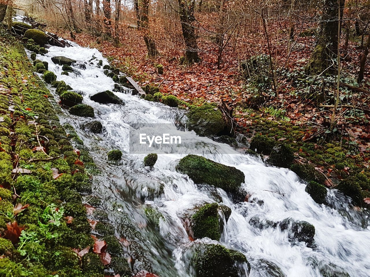 nature, forest, no people, tranquil scene, tranquility, beauty in nature, day, waterfall, tree, scenics, outdoors, water