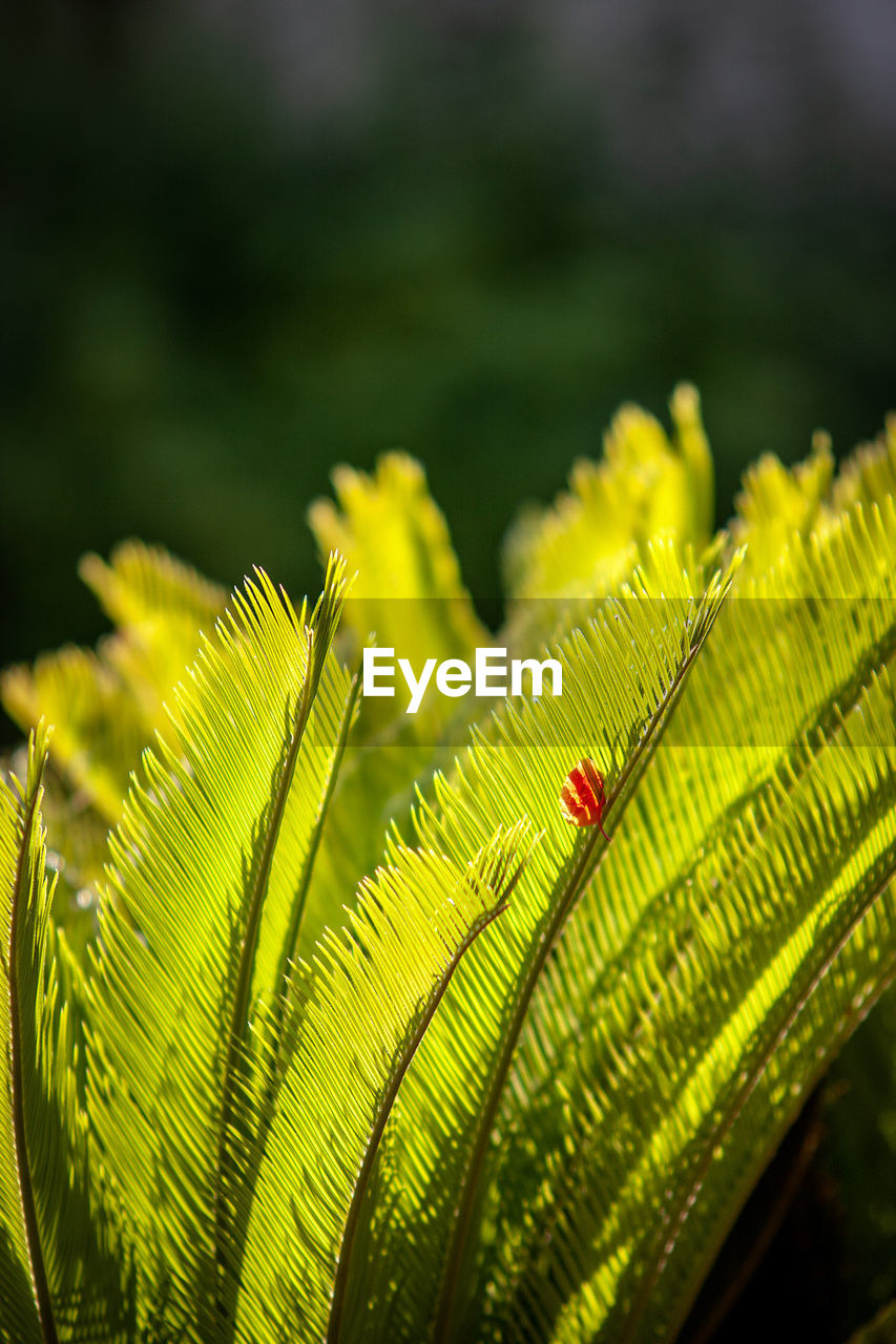 green color, leaf, plant part, close-up, plant, day, nature, focus on foreground, growth, no people, beauty in nature, insect, invertebrate, animals in the wild, animal themes, animal, one animal, animal wildlife, selective focus, outdoors, leaves