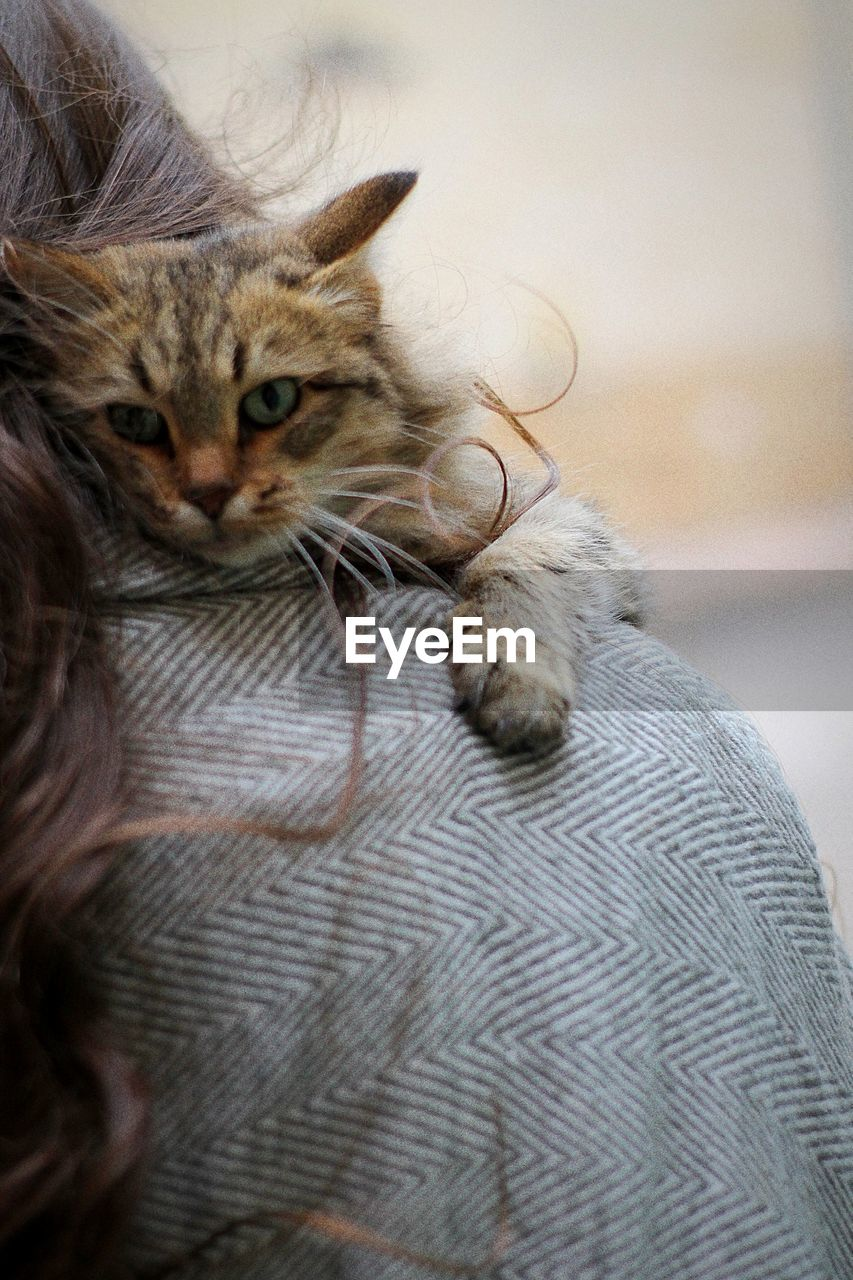 domestic, mammal, pets, cat, domestic animals, domestic cat, animal themes, feline, animal, one animal, vertebrate, indoors, relaxation, no people, whisker, focus on foreground, home interior, resting, animal body part, close-up, animal head, animal eye