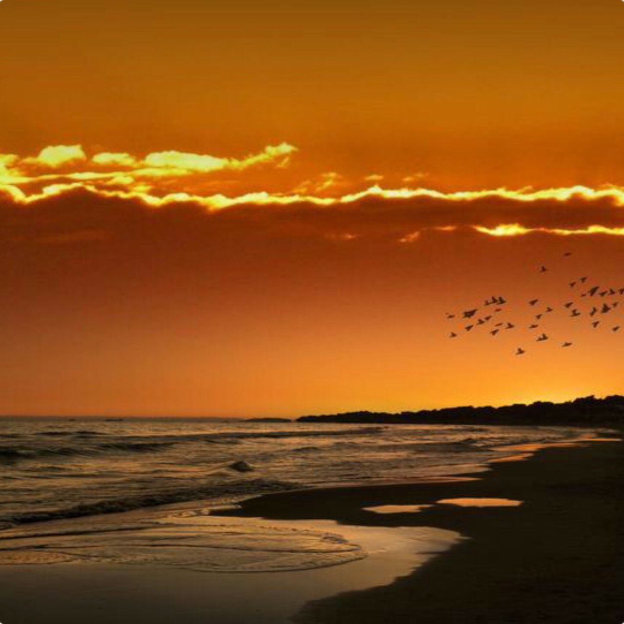 sunset, bird, animals in the wild, flying, flock of birds, large group of animals, animal wildlife, animal themes, sky, sea, silhouette, nature, outdoors, dusk, cloud - sky, beach, scenics, beauty in nature, no people, horizon over water, sand, day