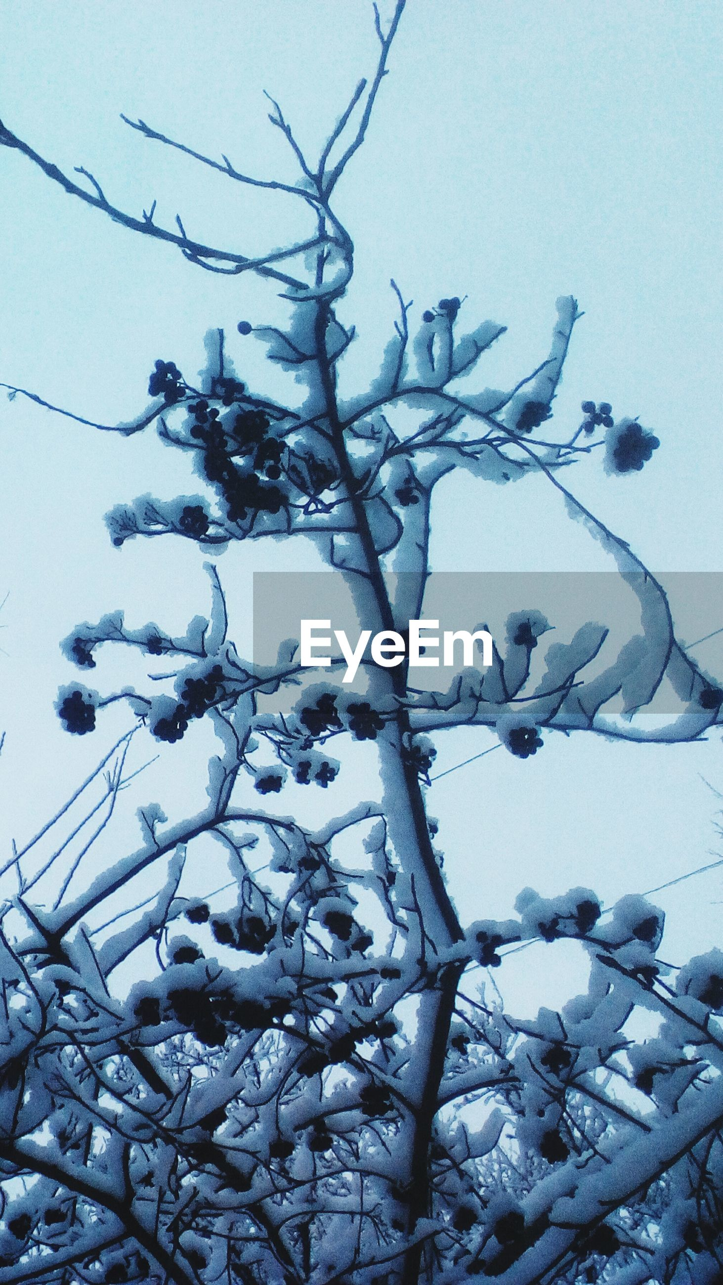 winter, cold temperature, nature, tree, branch, snow, no people, weather, beauty in nature, low angle view, day, sky, tranquility, outdoors, bare tree, scenics, close-up, backgrounds