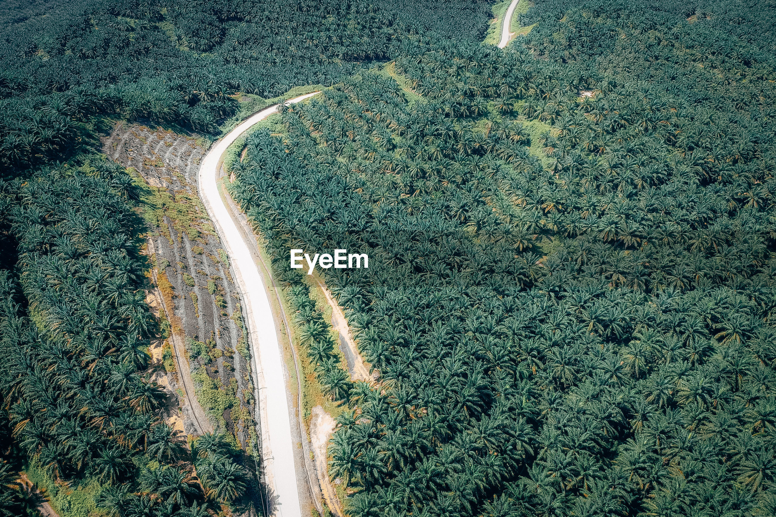 HIGH ANGLE VIEW OF ROAD AGAINST TREES