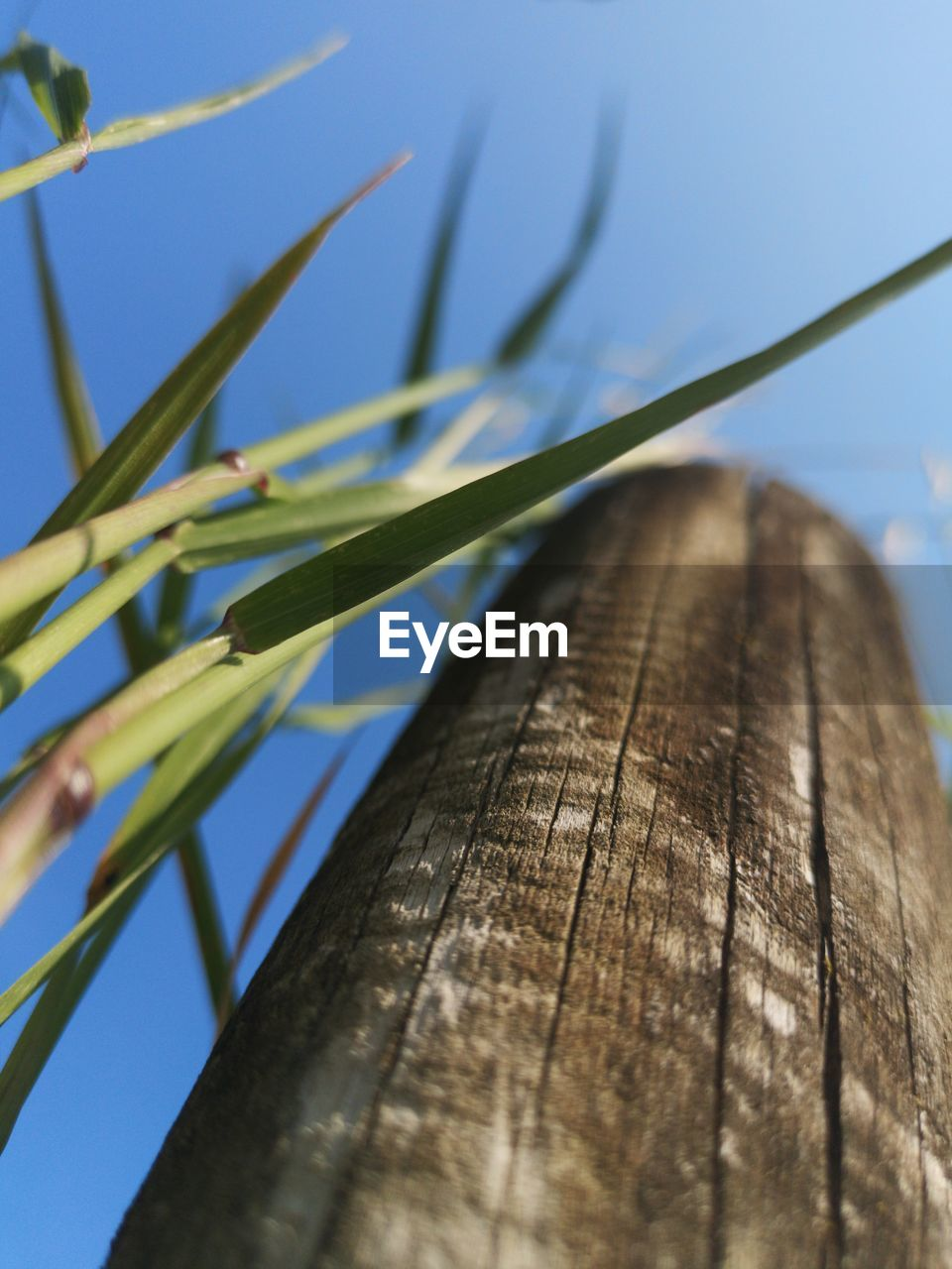 plant, close-up, wood - material, nature, no people, low angle view, selective focus, day, sky, growth, outdoors, focus on foreground, sunlight, tree, clear sky, green color, textured, wood, natural pattern, beauty in nature, blade of grass