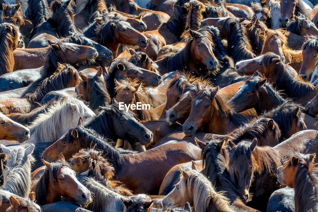 Full Frame Shot Of Horses