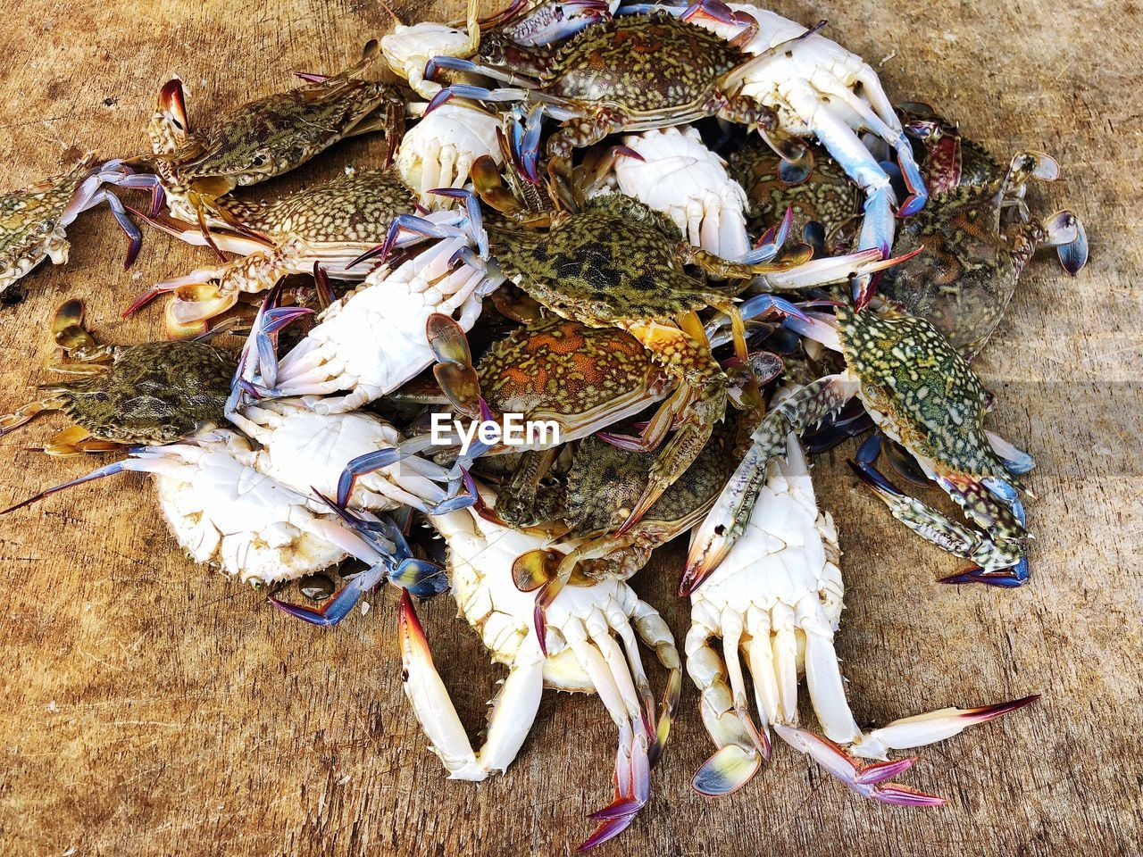 seafood, animal, crab, high angle view, food, food and drink, freshness, vertebrate, no people, crustacean, healthy eating, wellbeing, animal themes, day, crab - seafood, group of animals, fish, animal wildlife, close-up, outdoors