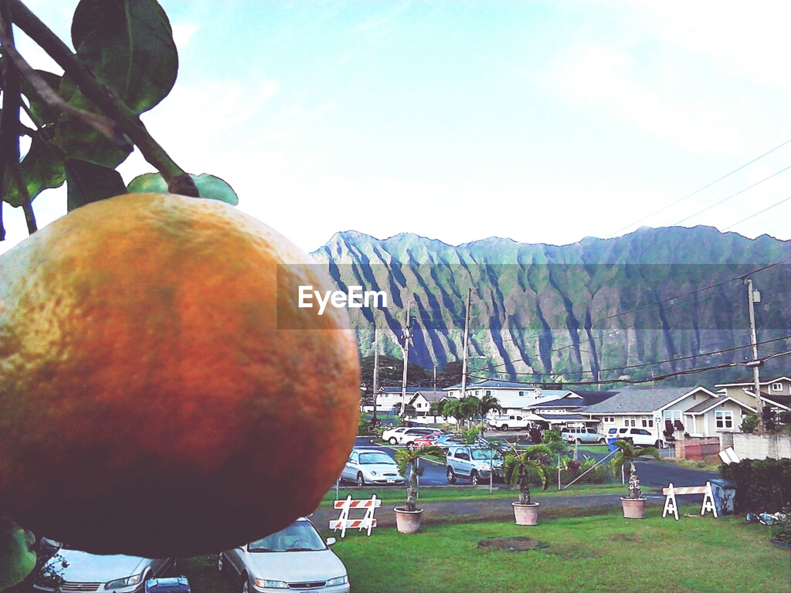 tree, mountain, building exterior, sky, built structure, food and drink, architecture, house, outdoors, nature, day, sunlight, mountain range, green color, food, clear sky, fruit, healthy eating, landscape, cloud