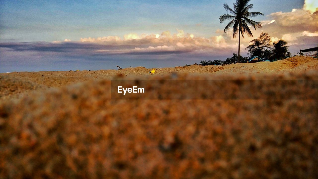 sky, tranquility, tranquil scene, beauty in nature, nature, scenics, sunset, landscape, beach, cloud - sky, no people, outdoors, palm tree, tree, sand, day