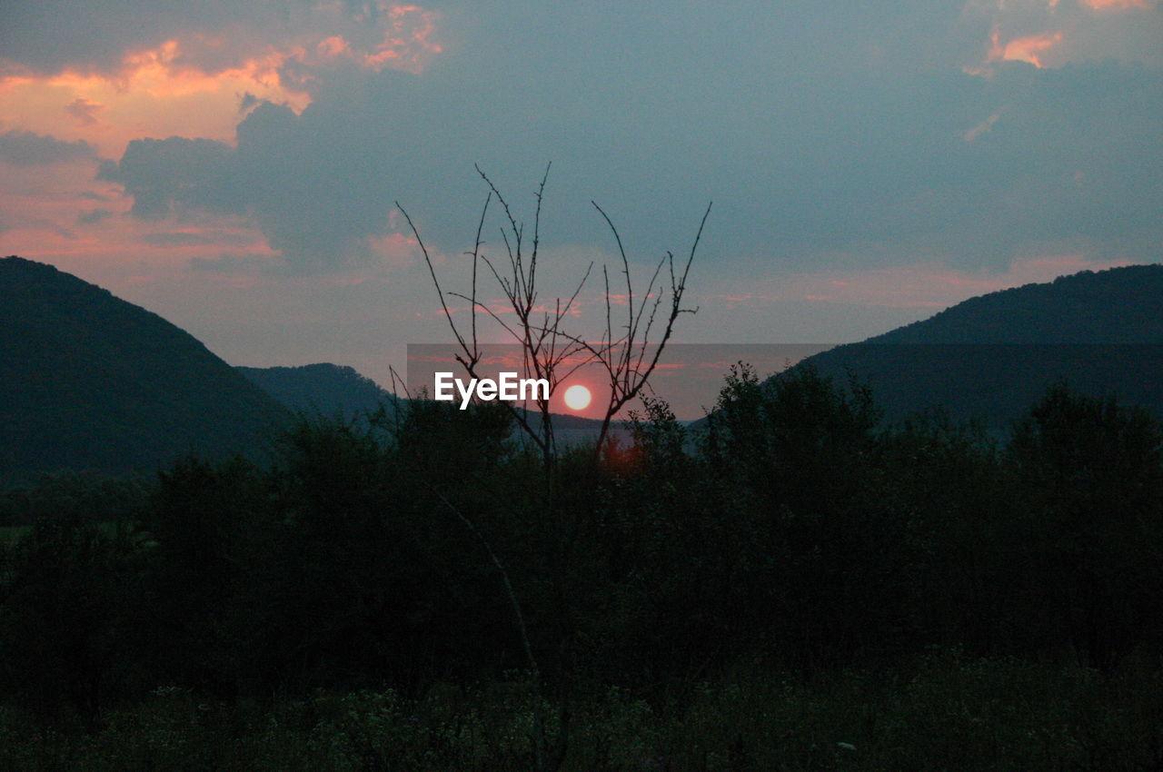SILHOUETTE TREES AGAINST SKY AT DUSK