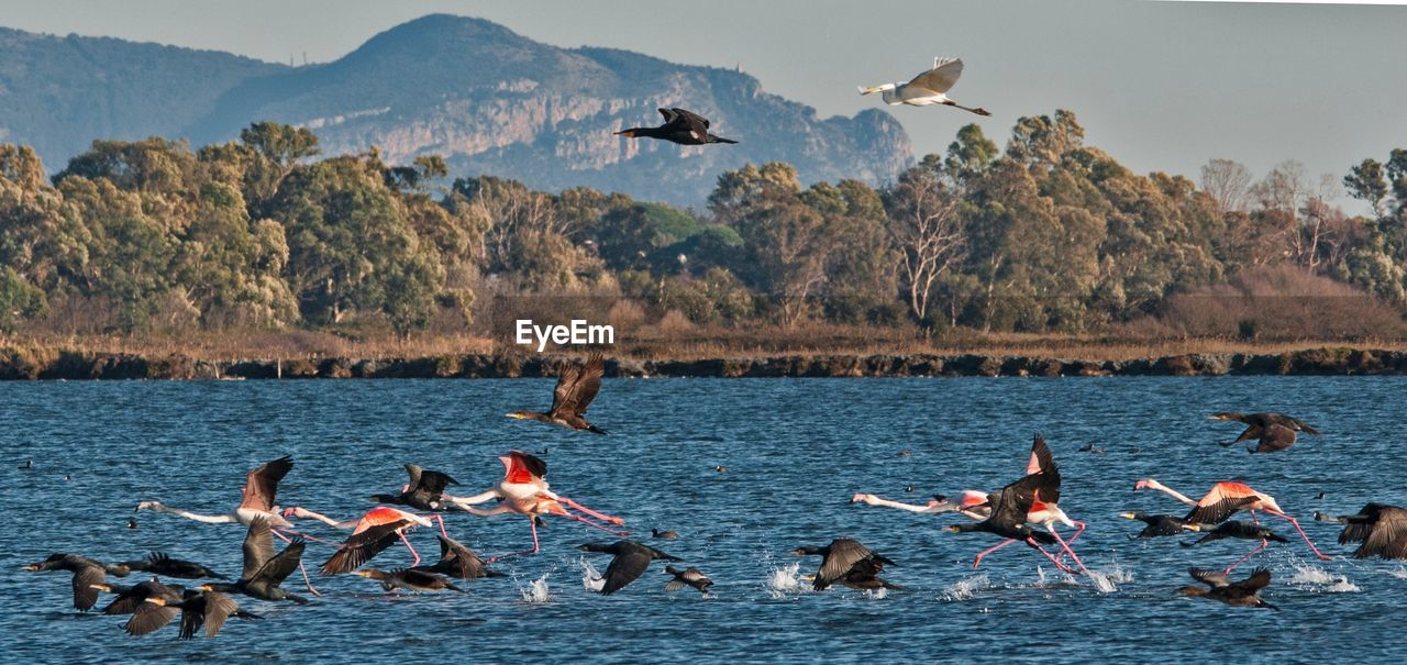 water, bird, animal wildlife, animals in the wild, group of animals, animal themes, vertebrate, animal, nature, sea, flying, mountain, beauty in nature, day, scenics - nature, waterfront, group of people, large group of animals, outdoors, seagull