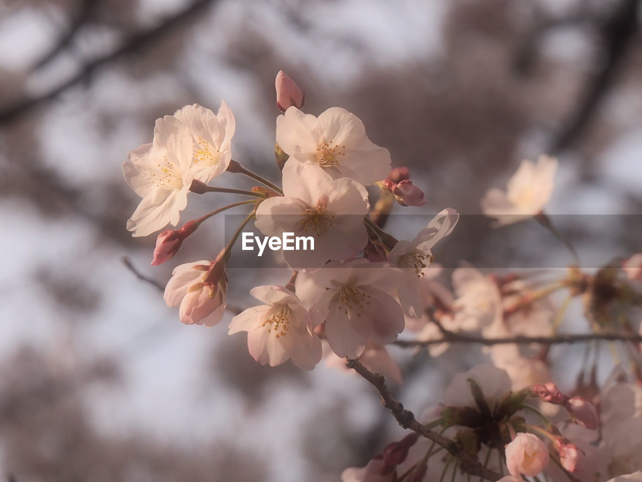 flower, beauty in nature, nature, blossom, tree, fragility, growth, apple blossom, springtime, no people, branch, focus on foreground, day, outdoors, freshness, close-up, flower head